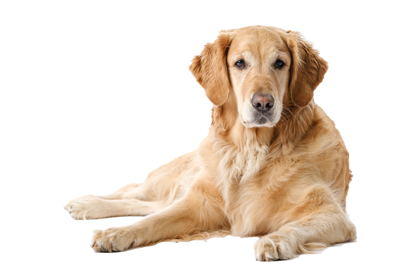 Fee liebt Reico Hundefutter
